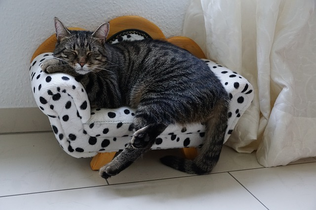 providing a cosy bed that's easily accessible helps arthritis in older cats