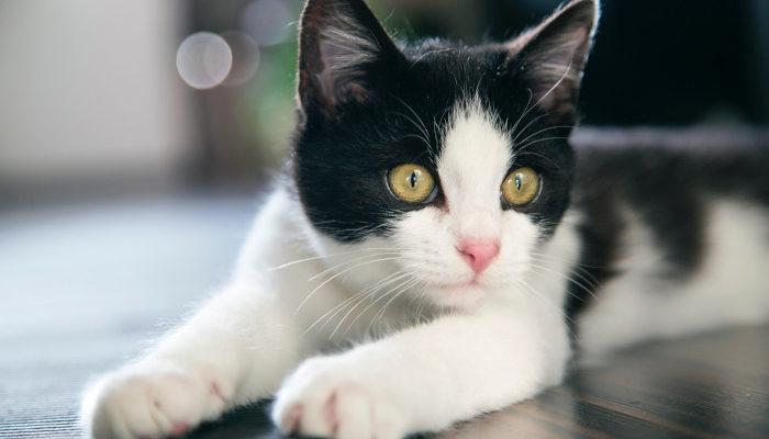 all about cat behaviour