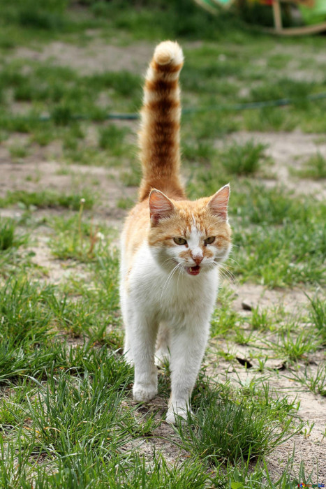 Cat tail flicking behaviour-what it means