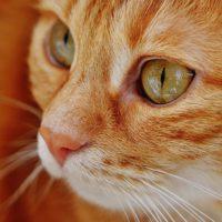 elderly cat health problems
