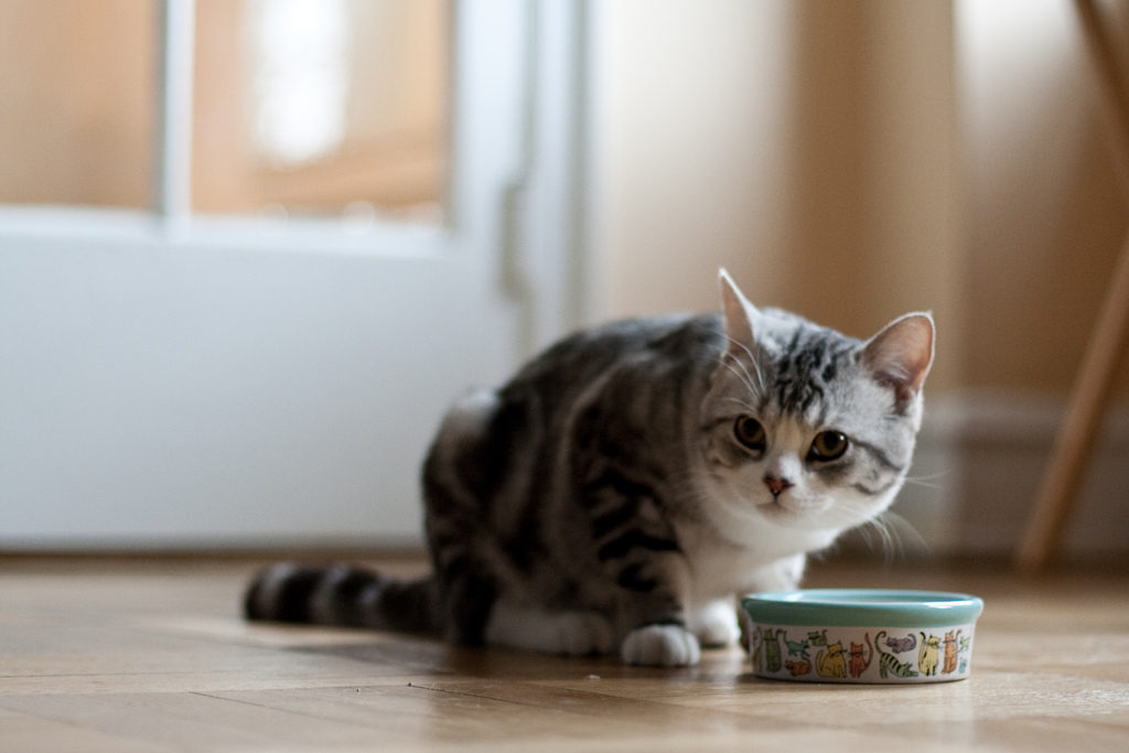 loss of appetite can be a sign of kidney disease in cats