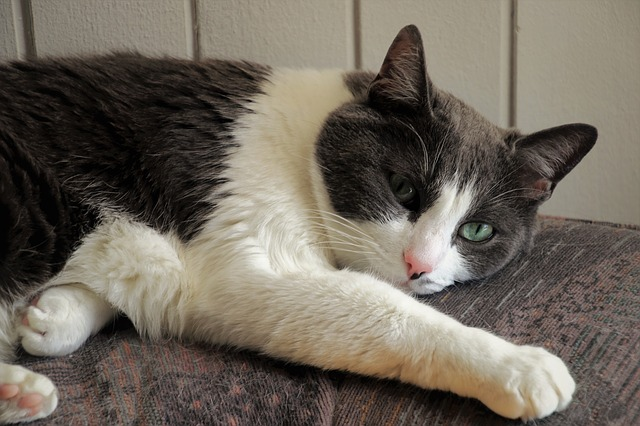 elderly cat health problems and deafness