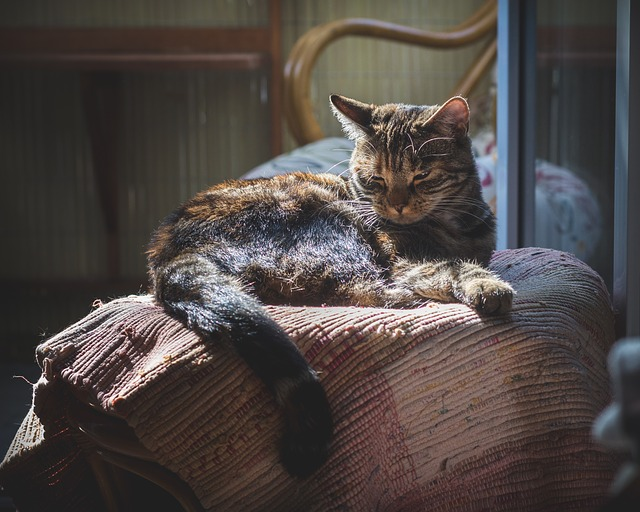 thyroid problems in older cats can mean weight loss