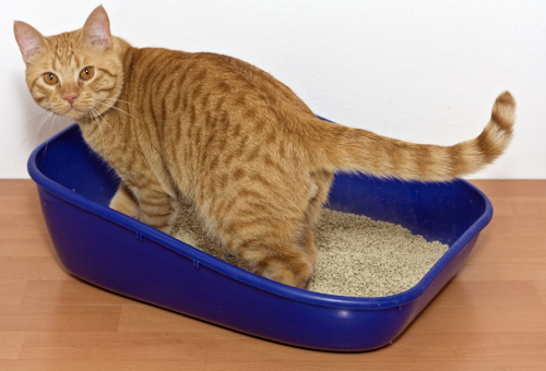 frequent trips to the litter box are one of the signs of kidney disease in cats