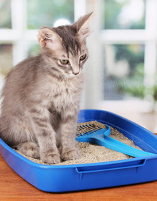 how to train your cat to use a litter box