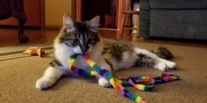 best cat toys for indoor exercise