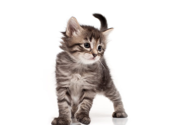 what is fresh step cat litter