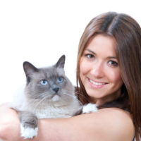 all about ragdoll cats