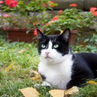 what is dental disease in cats