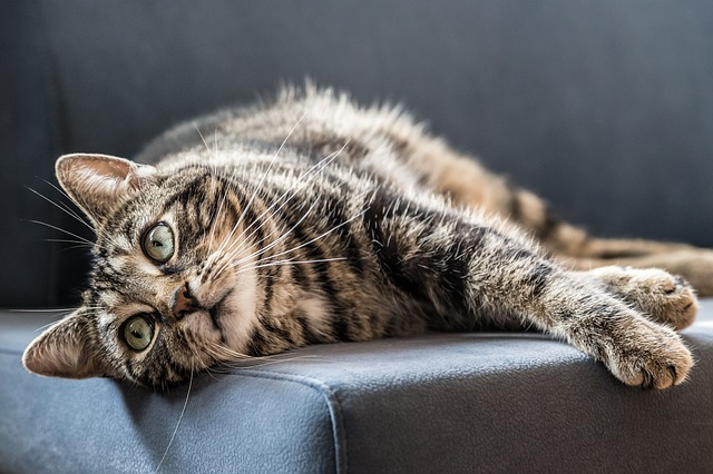 what to do about hairballs in cats
