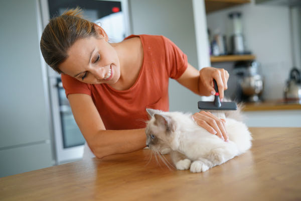 how to groom your cat