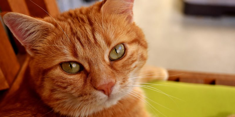 what causes hairballs in cats
