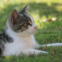 what is diabetes in cats