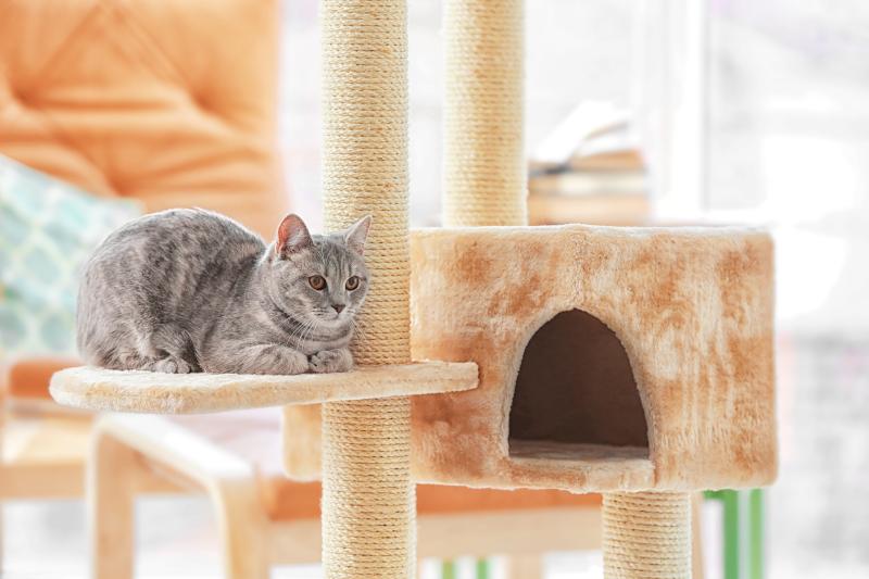best cat condos