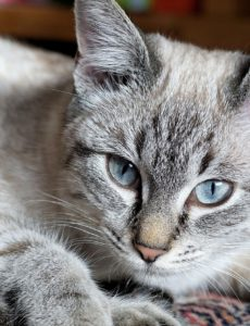 roundworm treatment for cats