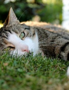 how to keep cats cool in hot weather