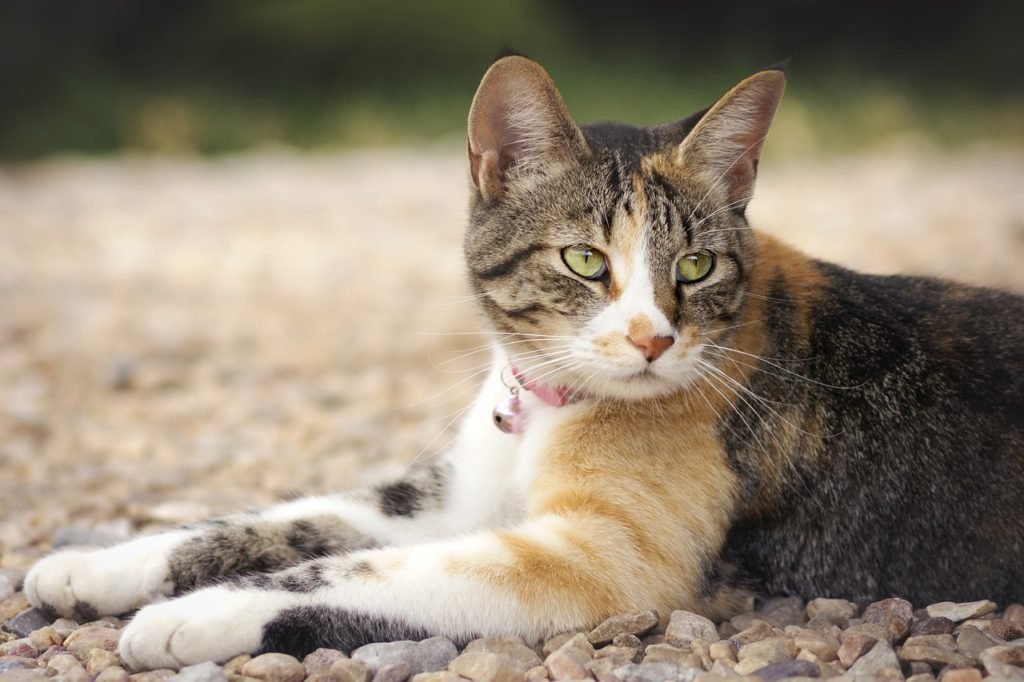 what causes roundworms in cats