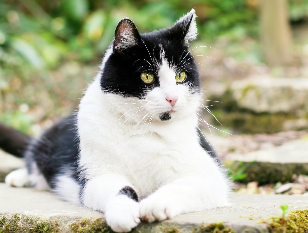 signs of feline leukemia