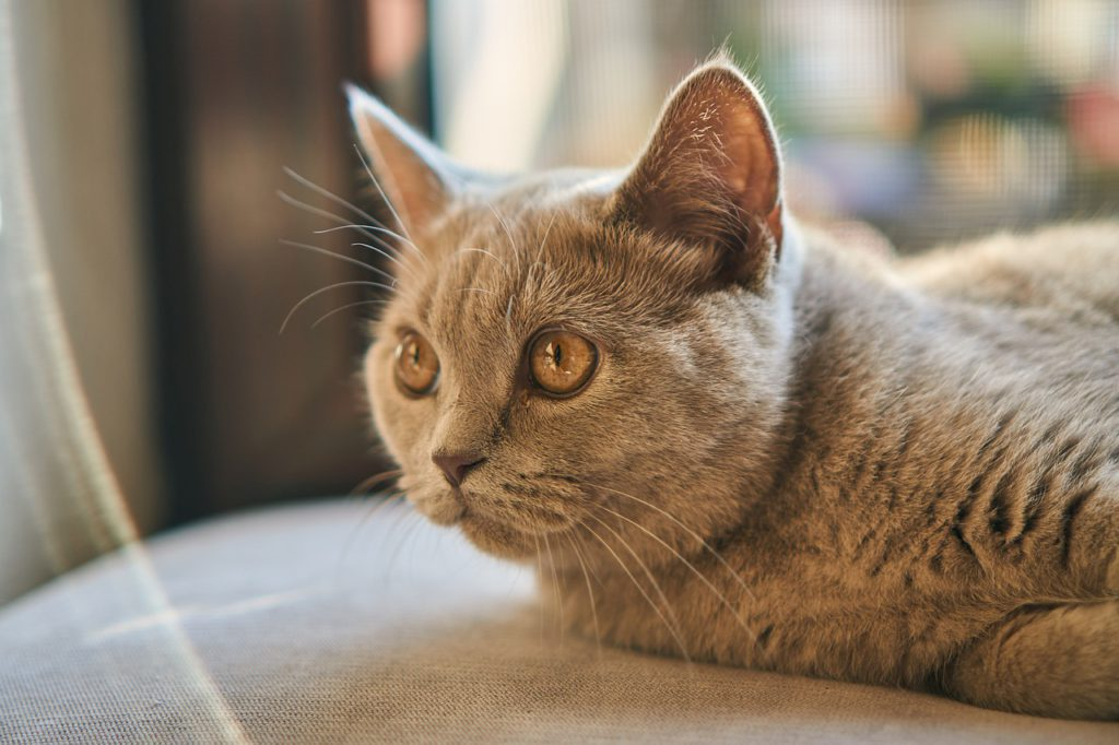 why cats pull out hair