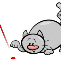why do cats love laser pointers