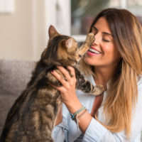 natural pain relief for cats