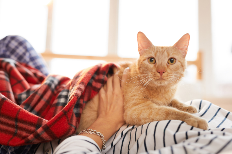 heated blanket as a pain relief for cats