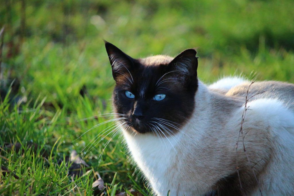 what causes joint pain in cats