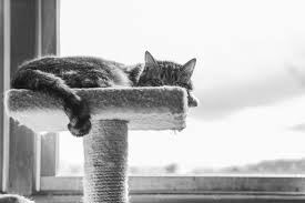 cat perches help stimulate cats with dementia