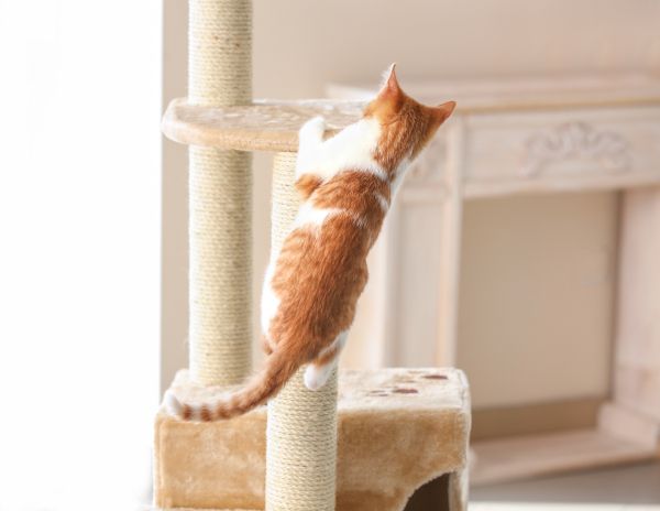 how to train your cat to use a scratching post and stop scratching furniture