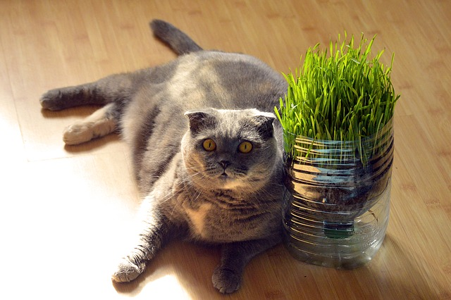 causes of obesity in cats