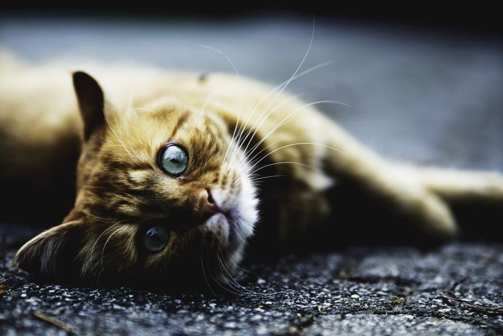 cat stroke symptoms treatment