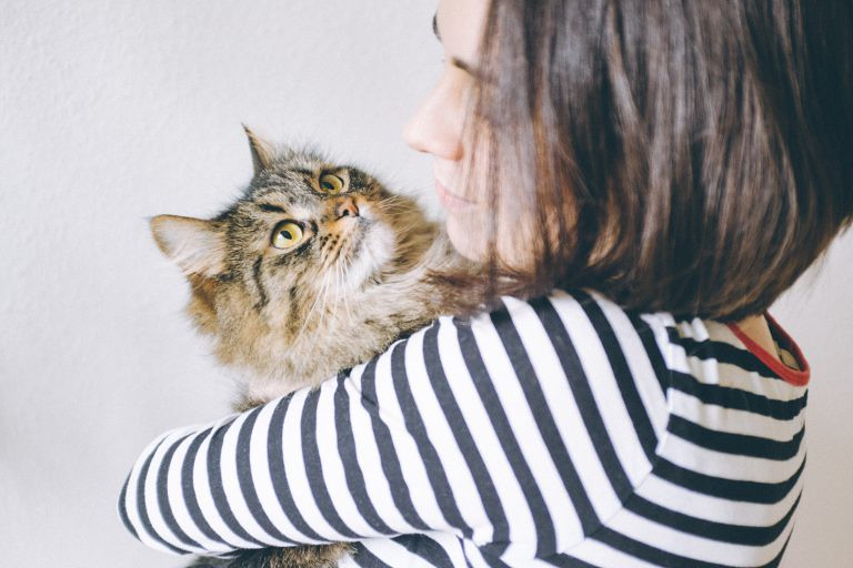 interact with your cat if she has dementia