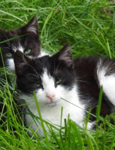 are male cats more affectionate