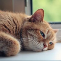 can kidney disease in cats cause excessive drooling