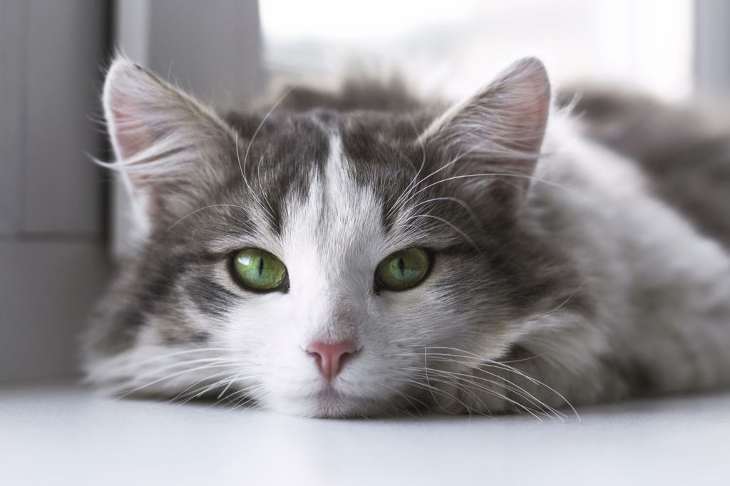 do cats grieve the loss of another cat