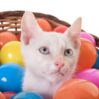 the best catnip toys for cats