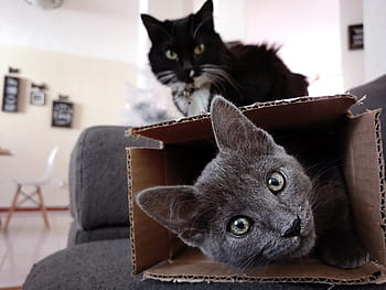 cats love cardboard boxes