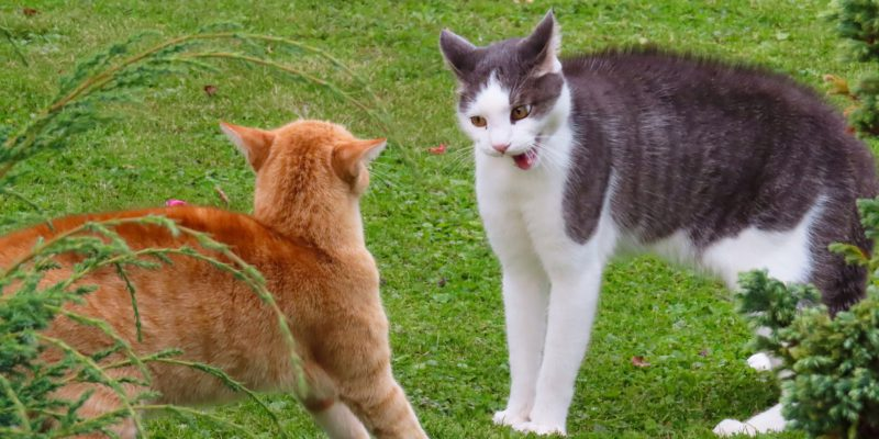 how to stop your cats from fighting