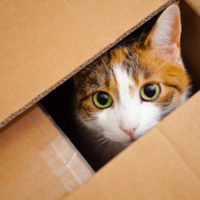 why do cats like boxes so much