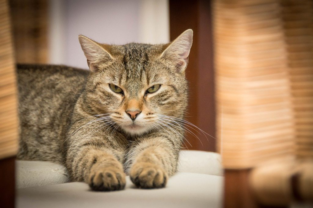 can environmental factors cause weight loss in cats