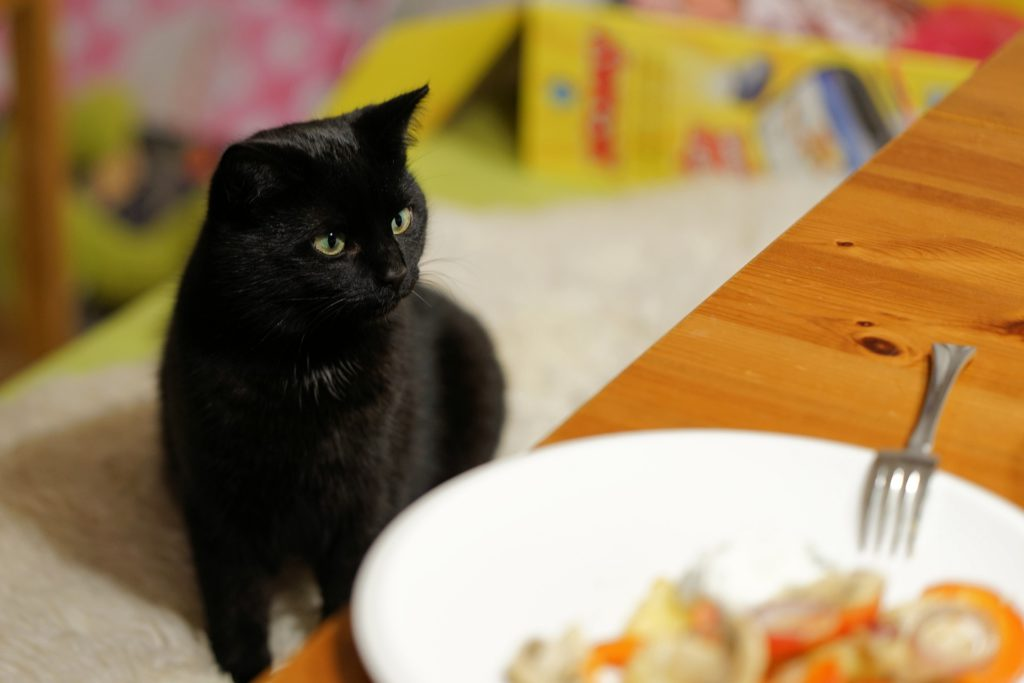 what foods are bad for cats and how to stop your cat eating them