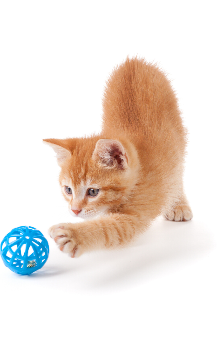 how to train your cat to fetch