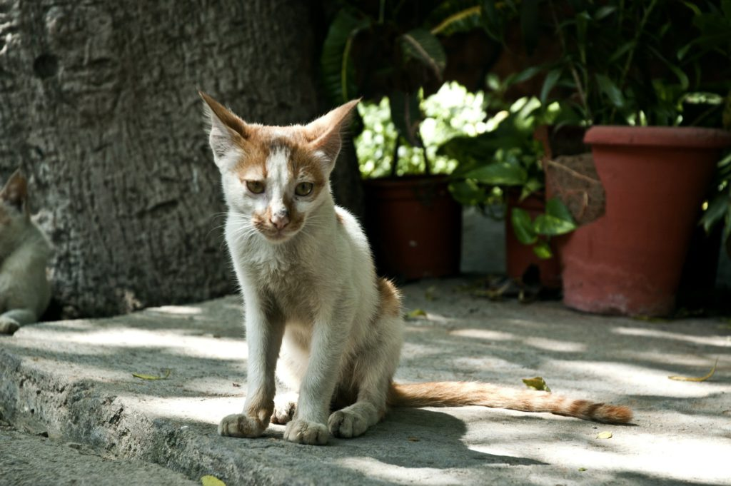 why do older cats lose weight