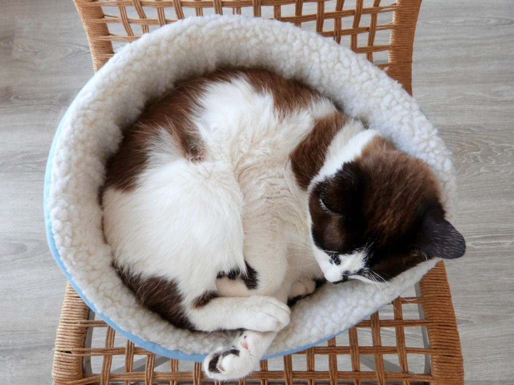 fleece lined cat bed
