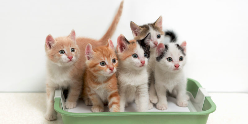 best cat litter for kittens