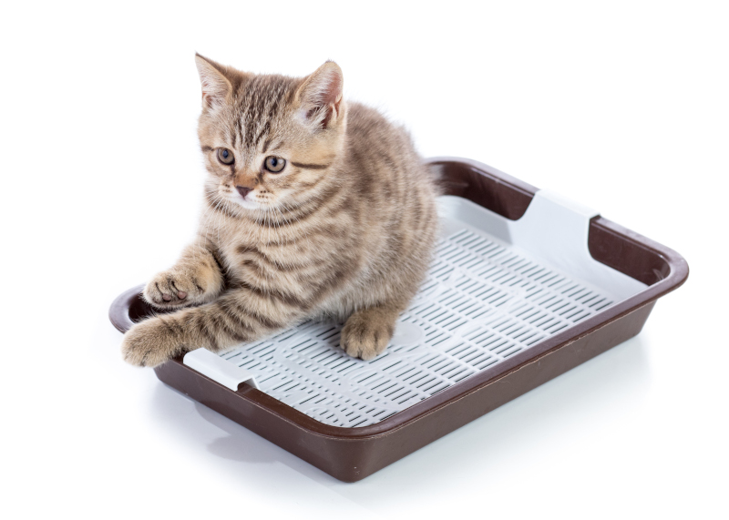 best cat litter for kittens-kitty sitting in litter box