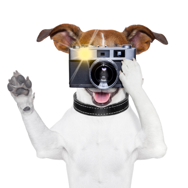 what is a pet camera and what are the benefits. Graphic of dog taking photo