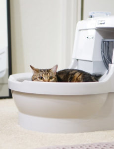automatic kitty litter box reviews