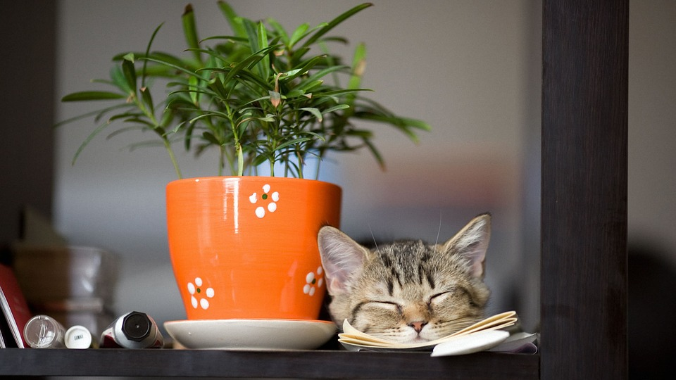 cat sleeping next to tea cup