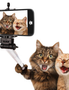 what is a pet camera